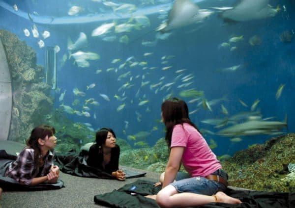 水族館で朝まで語り尽くす女子会プラン「レディースナイトステイ」