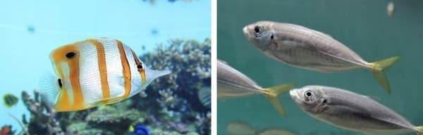 熱帯の魚(左)と、温帯の魚(右)が見られる