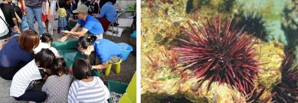 海の生命についてさわって学ぶことが可能