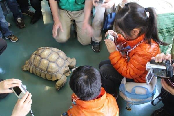 東武も「アニマルトレイン」を運行した実績あり、写真は東武動物公園のリクガメ