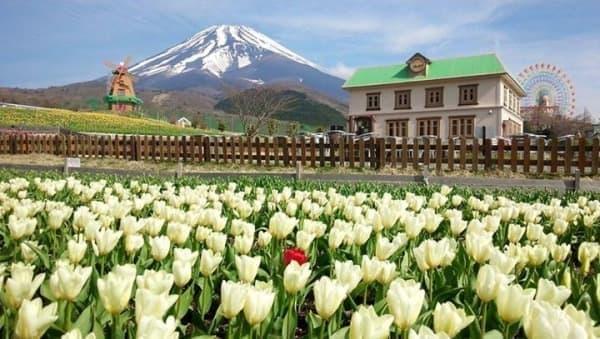 3月に入ってからの気温の上昇により、生育が順調に進んだという  画像は4月24日朝時点の開花状況(ぐりんぱの Facebook より)