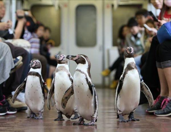 ペンギンが列車内を行進するといえば近鉄志摩線の「ペンギン列車」が有名だけど