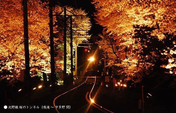過去のライトアップのようす(出典:京福電気鉄道)