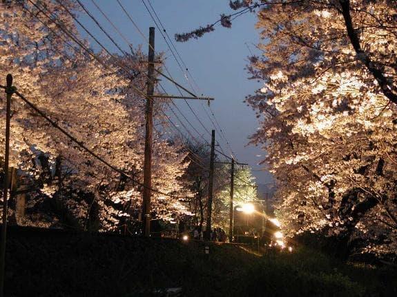 「夜桜電車」が運行する(出典:京福電気鉄道)