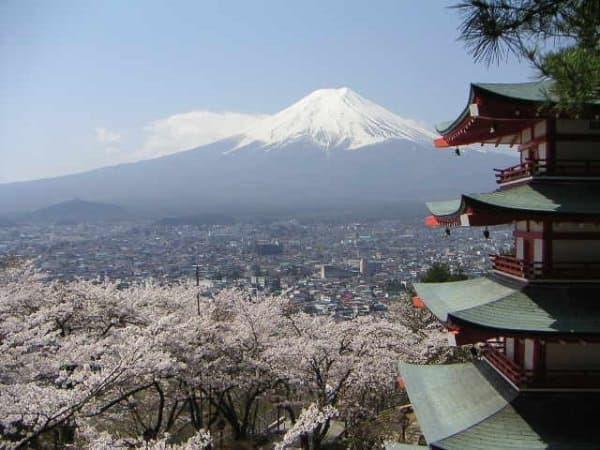 桜と富士山の景色を同時に楽しむ「桜キャンペーン」