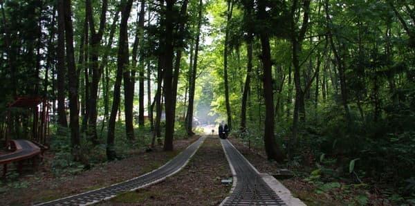 森の中の園内鉄道