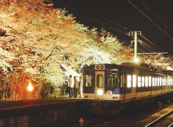 4月10日と16日に運転される夜桜電車「飲んでん」