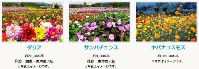 「富士山の裾野 天空のダリア祭り 2015」で鑑賞できる花