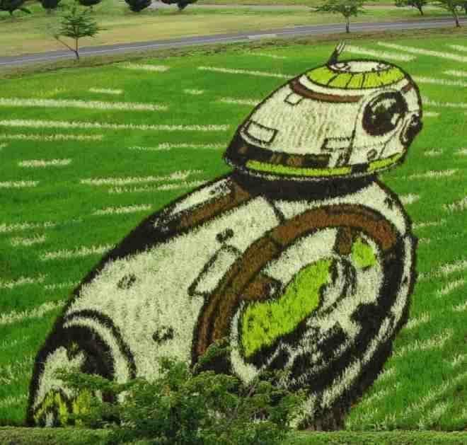 ボール形ドロイド「BB-8」も見頃!  (c) & TM Lucasfilm Ltd.