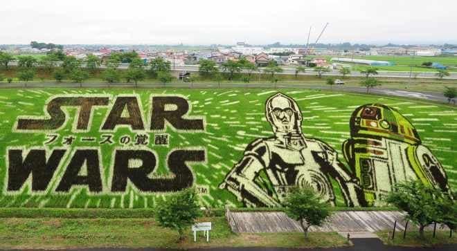 2015年版「田んぼアート」  アートのテーマは『スター・ウォーズ/フォースの覚醒』  (c) & TM Lucasfilm Ltd.