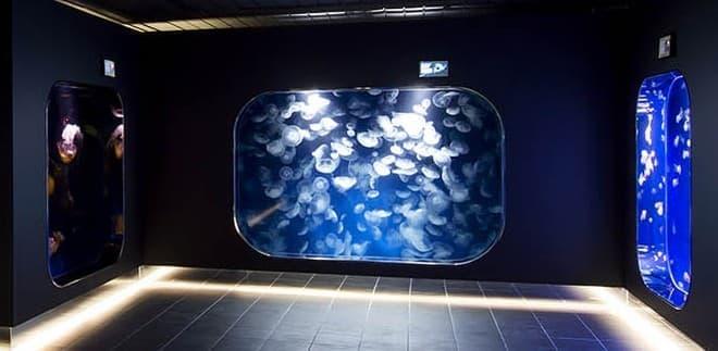 大人が楽しむならここ  9種類のクラゲを観察できる生体展示ゾーン