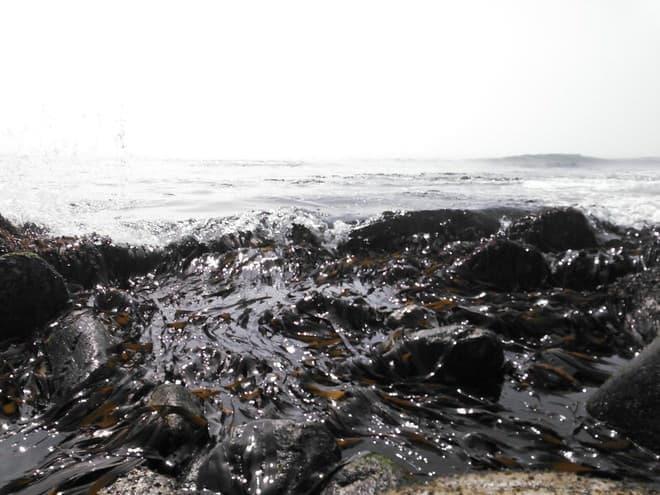 そして海にはあふれんばかりのコンブがあり(Twitterユーザーの厚意により許諾を得て転載)
