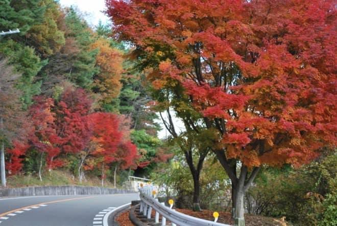 11月までには紅葉も楽しめるように