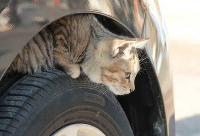 「#猫バンバン プロジェクト]本格始動