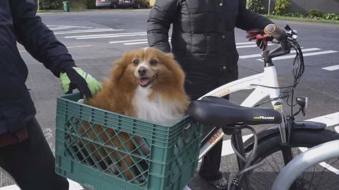 犬をのせても安定走行