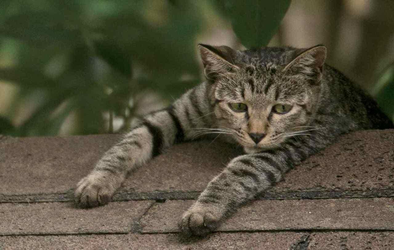 困り顔のネコ、はじめました ― 沖昌之さんによる『明日はきっとうまくいく』発売