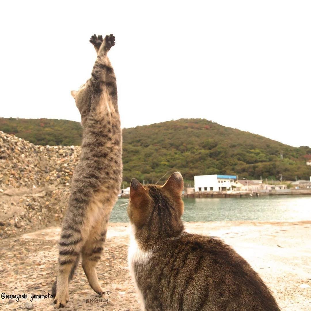 ネコ写真家山本正義さんによる『立ち猫』出版記念パーティ、3月21日開催
