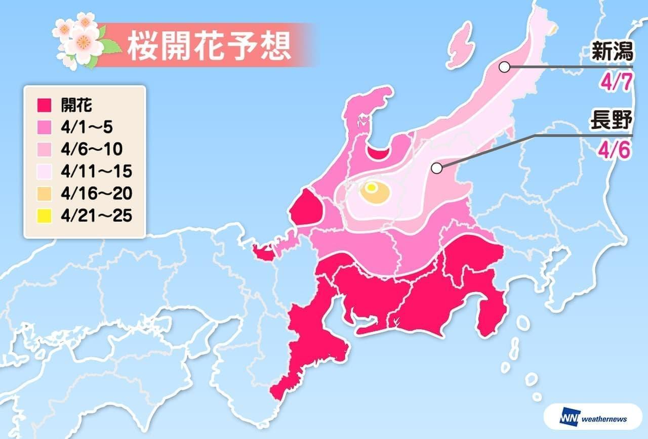 ウェザーニューズが「第八回桜開花予想」を発表