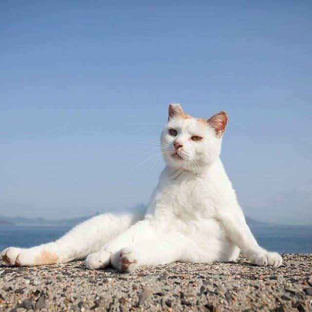 立ち猫、友達を呼ぶ―ネコ写真家6人による写真展「ニャン都物語」
