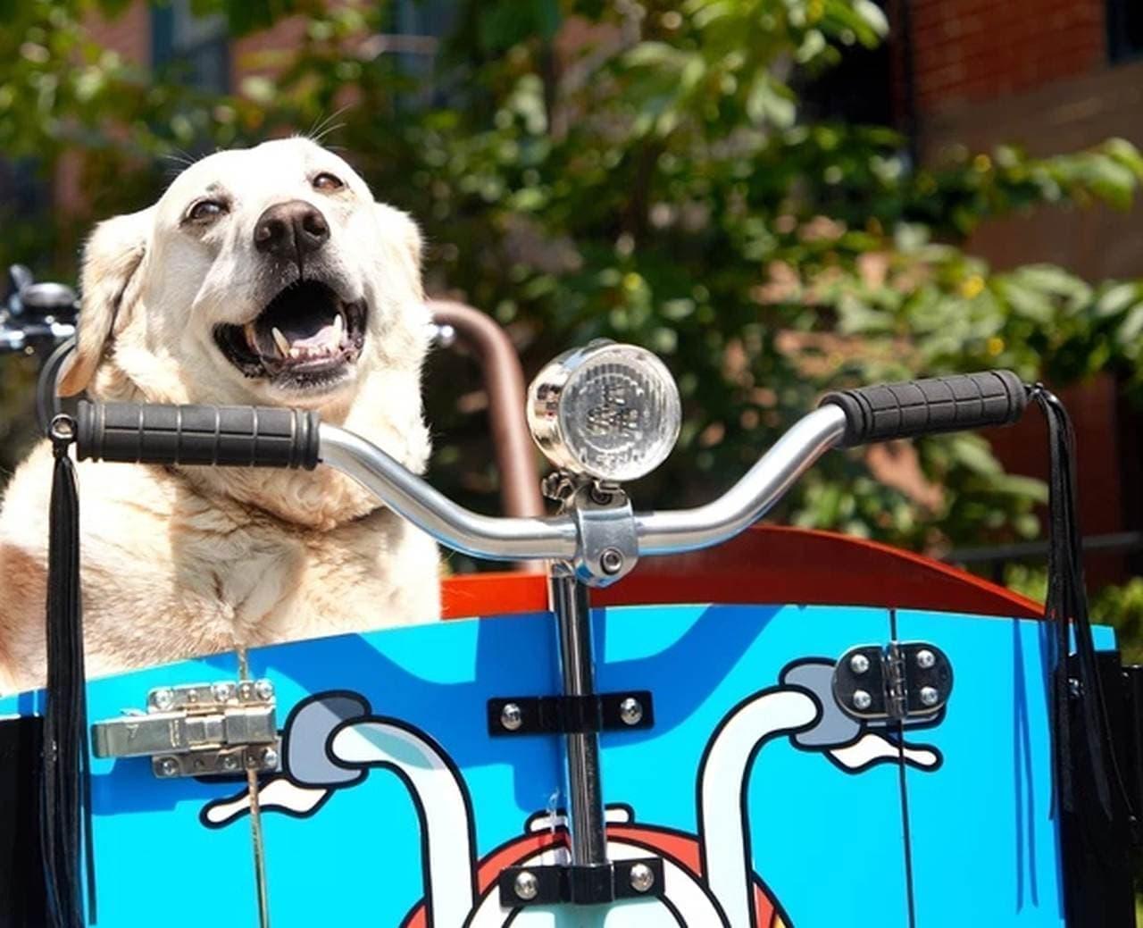 犬専用のカーゴバイク「The Bark」