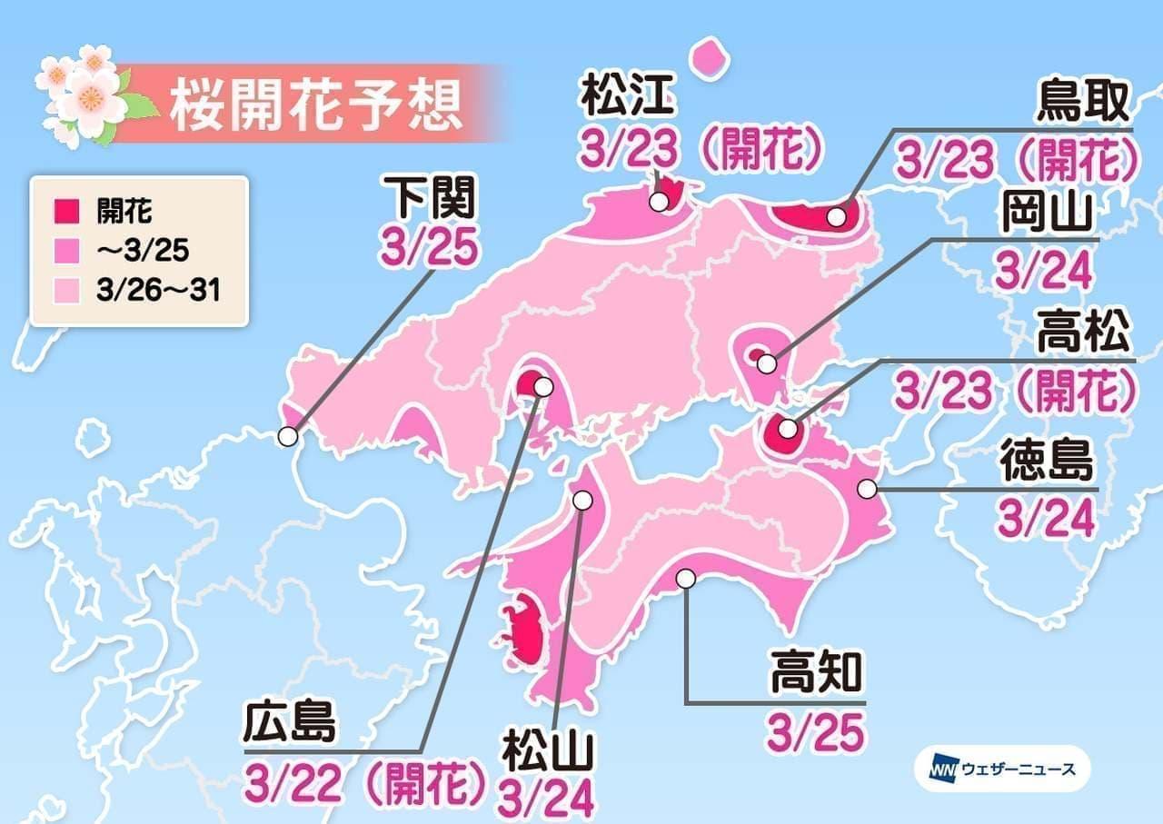 ウェザーニューズが「第七回桜開花予想」を発表