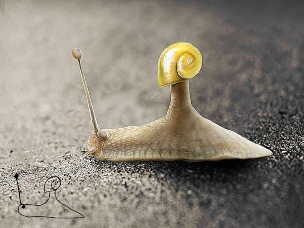 あきらかに、殻には入れないカタツムリ