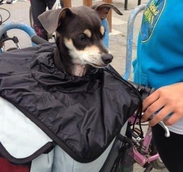 雨で犬が濡れてしまうことを防ぐ、「レインカバー」も用意
