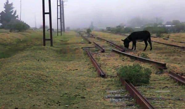 写真には、100年近くもの間、多くの列車が走行していた線路が