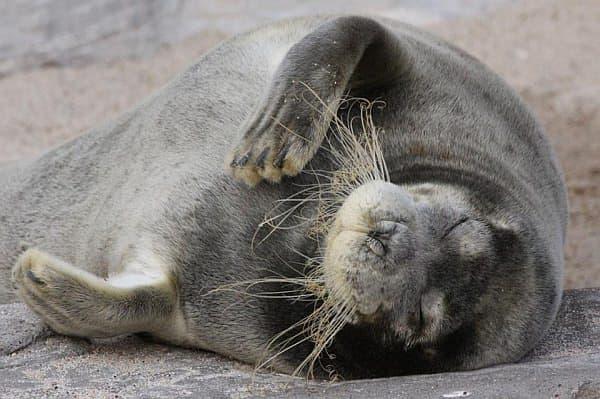 ま、昼間から寝ている動物もいるんですけどね…。