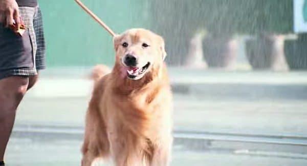 犬だって、大喜び!
