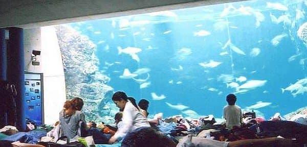 この水槽で泳ぐ魚、どれもおいしそうなんですよね…