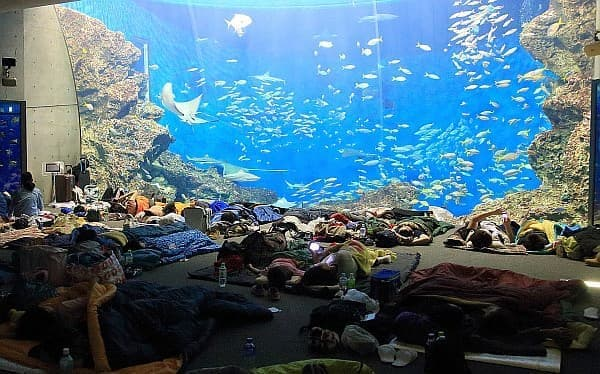 「トロピカルナイトステイ」は、大水槽「無限の海」の前で、寝袋で一夜を過ごすイベント