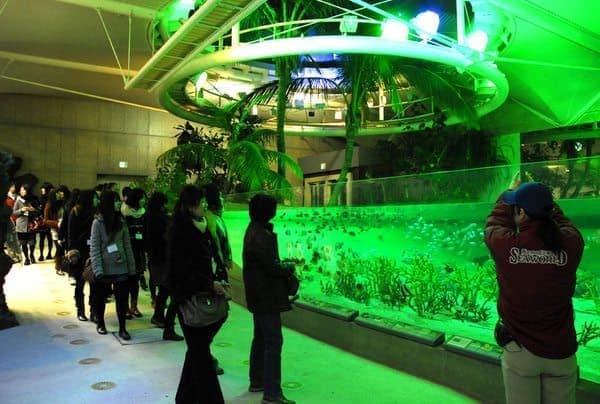夜の魚たちを観察する「夜の水族館探検」  魚さんたち、覗いてごめんね