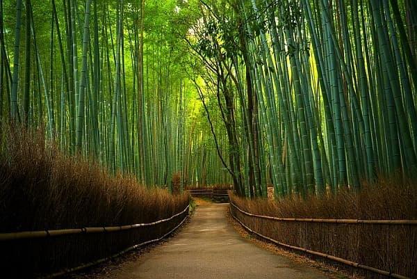 竹は、最も効率の高い天然の再生可能素材