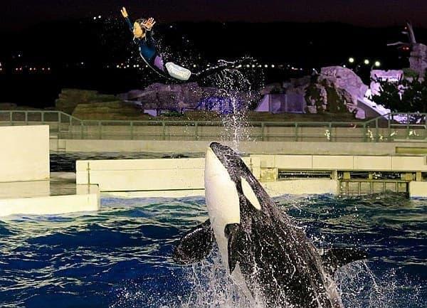シャチ特別パフォーマンスの貸切観覧  「シャチに乗って、空を飛ぶ!」