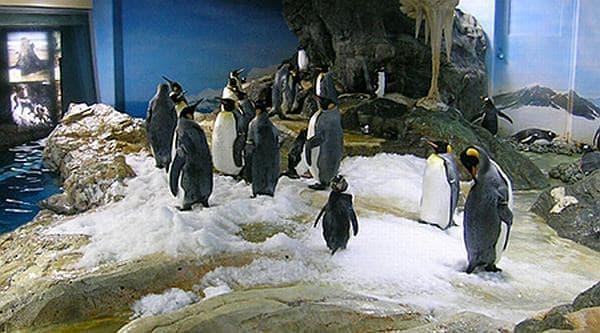 ロッキーワールド地下のペンギン  この子たちも、起きてます  寝姿を見たければ、「ナイトアドベンチャー」に参加するしかない?
