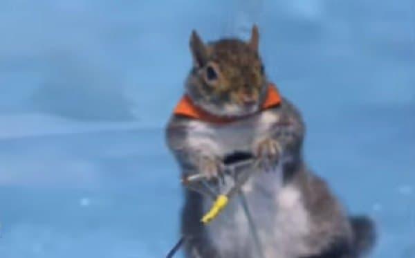 水上をおよそ時速10キロで滑走します!  かっこいい!