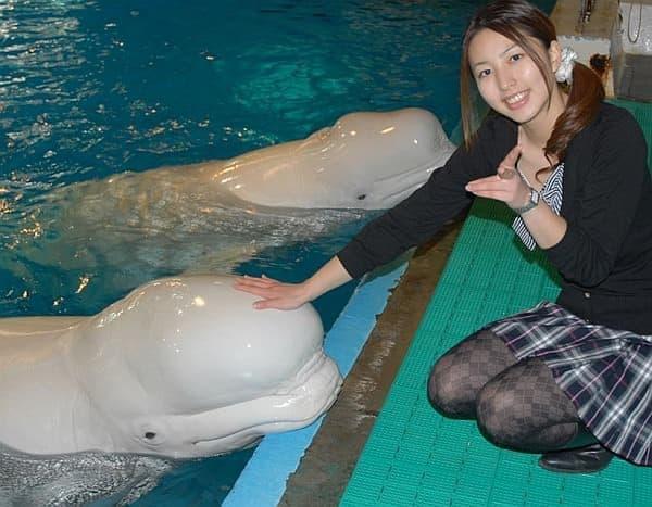 白イルカにタッチしたりキスしたりできる「ベルーガキス」  白イルカ、かわいい!
