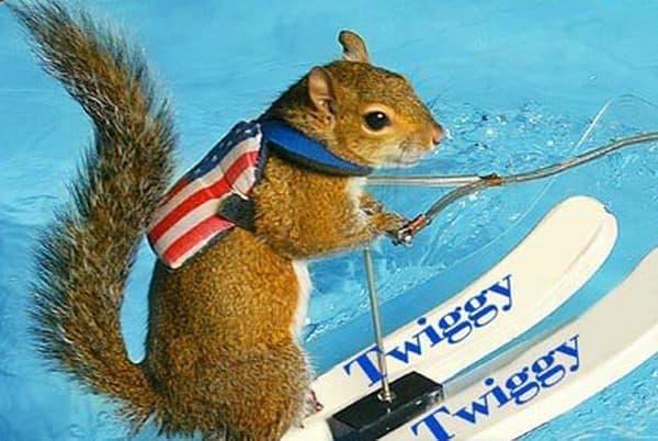 Twiggy は、専用水上スキーに乗り