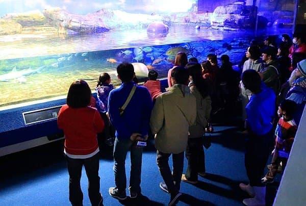 鴨川シーワールドの夏休み限定プログラム「ナイトアドベンチャー」