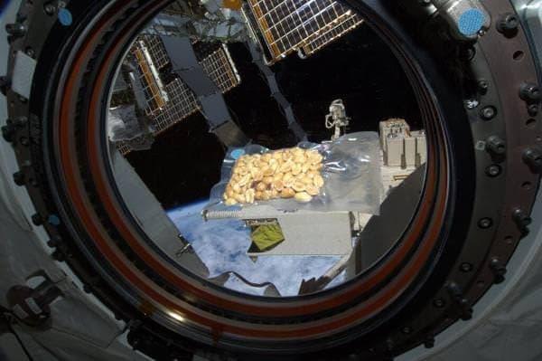 きぼう日本実験棟の中で豆まき  (若田光一さんのTwitterアカウントから)