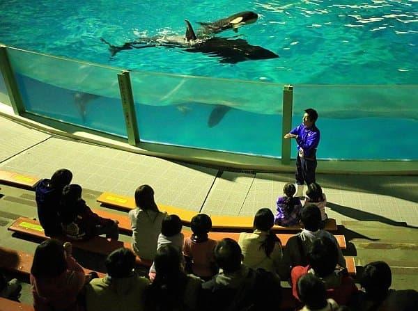 夜の水族館を、飼育係員の解説を聞きながら巡ります